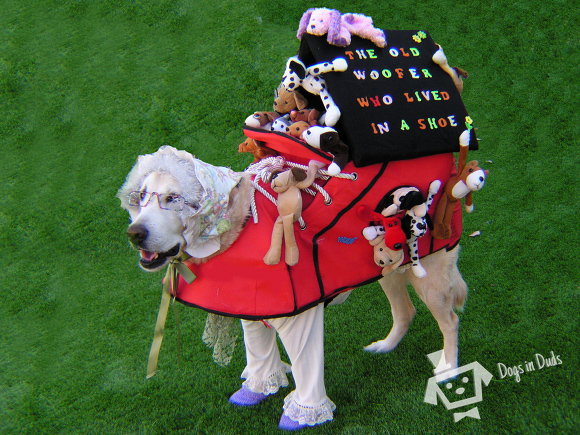 shoe house, dog costume, old dog, grandma dog