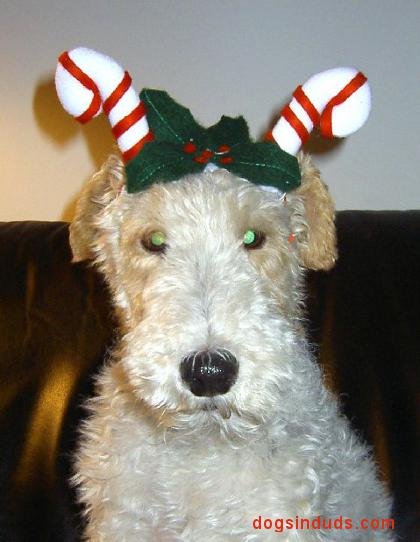 wire fox terrier christmas