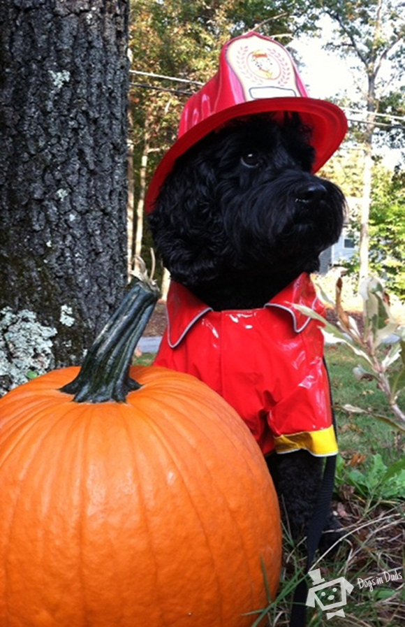 firefighter costume, dog costume
