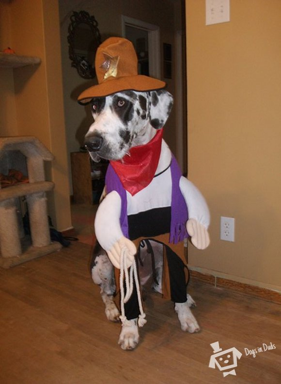 cowboy halloween costume, dog costumes, great dane dog costume