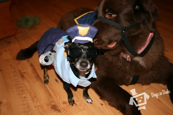 police dog, costume, horse costume, cute dogs