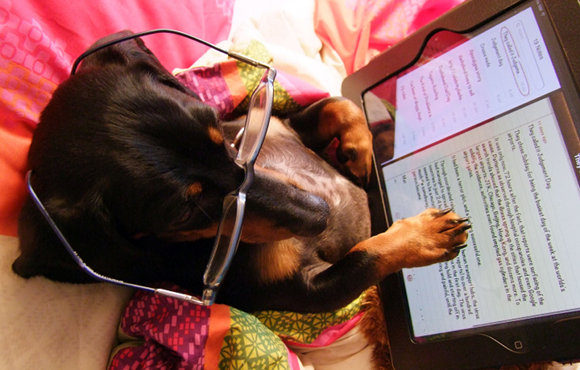 dog using ipad, dog, ipad, win an ipad 3, ipad 3, contest, photo contest