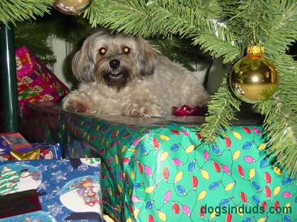 dogs poop under christmas trees