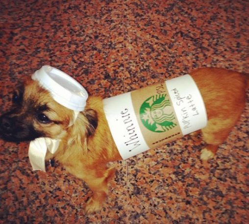 pupkin-spiced-latte