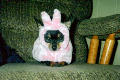 Real Easter Bunny